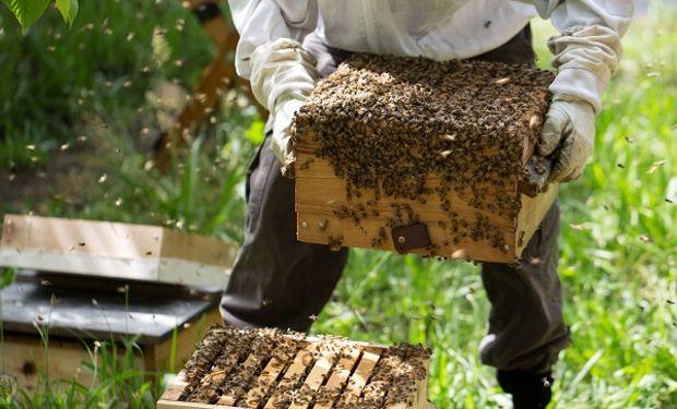Argentina ocupa el puesto 7 como productor de miel y el número 2 en el ránking de exportadores.