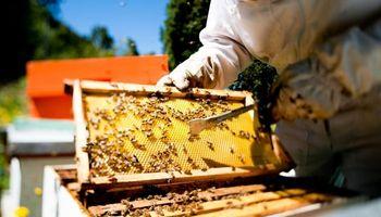 Santa Fe sancionó una ley que beneficiará al productor apícola