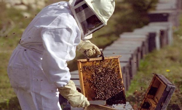 Las ventas externas de miel, además de gravadas con un derecho de exportación del 10% sobre el valor FOB, resultan también afectadas por el creciente retraso cambiario.