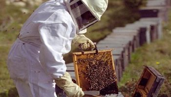6.8 millones de pesos para impulsar la producción de miel
