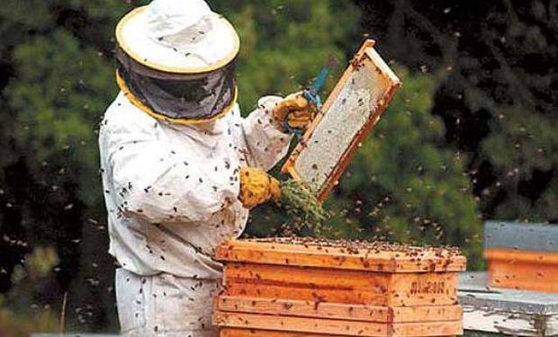 Nuestro país es conocido por la excelente calidad y la gran variedad de colores y sabores de las mieles.