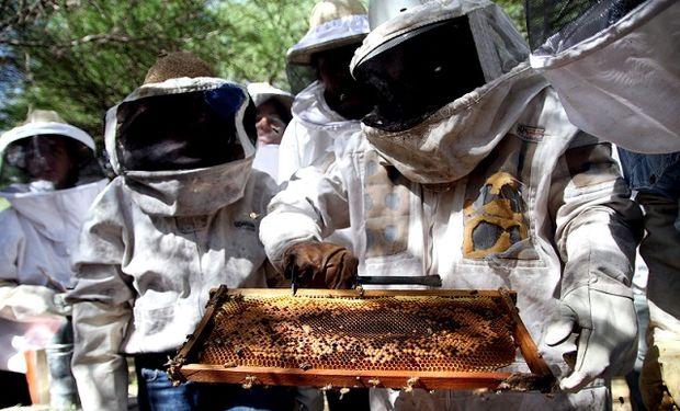 De los 57 proyectos presentados que implicaba a 97 apicultores involucrados se eligieron los 40 proyectos e ideas proyecto ganadores.