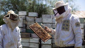 Día del apicultor: una actividad que coloca a la Argentina en el podio mundial