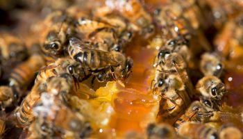 Argentina: sede del mayor encuentro de la apicultura orgánica en el mundo