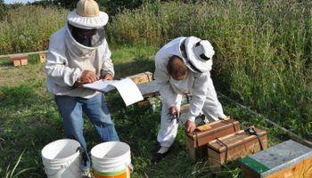 Buenos Aires: aumentó la inscripción en el nuevo registro de apicultores