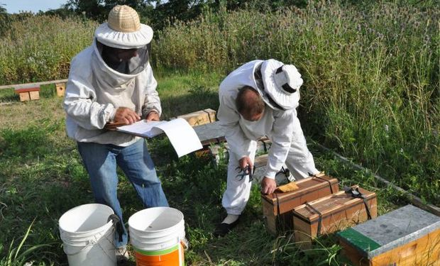 Buenos Aires representa el 55 por ciento de la producción de miel del total nacional.