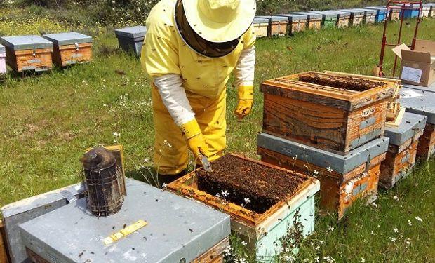 La provincia de Buenos Aires representa 53% de la producción total de miel del país.
