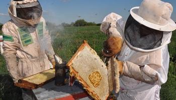 Las exportaciones de miel crecieron 74 por ciento en 2016