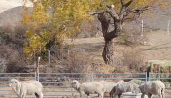 Apoyo a productores de la Patagonia