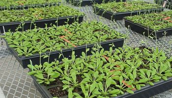 A tener en cuenta: en invierno las plantas bajan sus defensas contra patógenos
