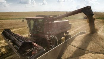 Sube Ucrania un 23% existencia de cereales