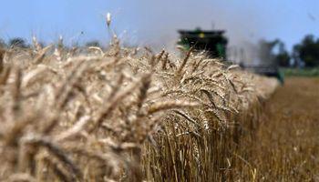 La cadena de trigo se reúne en Leones