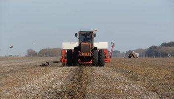 En Uruguay cae 21% la superficie triguera