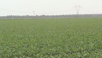 EE.UU.: área de maíz y soja, rumbo a nuevo récord