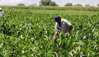 Índice de Viabilidad: qué posibilidades tienen los cultivos de cubrir los costos