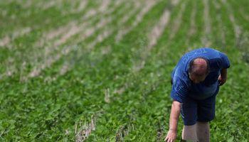 Fertilización: los ensayos que invitan a los productores a aplicar dosis altas en soja