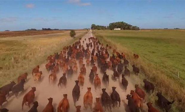 Con un drone, filman un arreo de ganado. Drone Films Project.