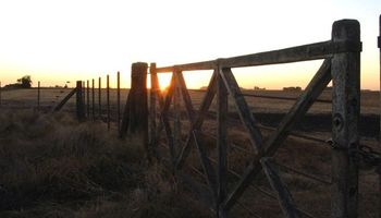 Arrendamientos: se pactan con baja de hasta 3 quintales