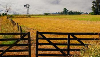 A cuántos quintales se cierran los arrendamientos agrícolas de la nueva campaña