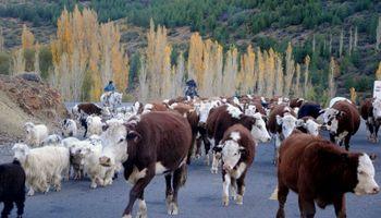 Cómo y por qué se hace ganadería en reservas nacionales