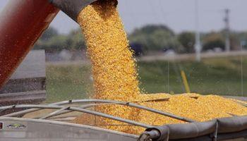 La soja se negoció a $10.400 en Rosario y pagaron US$ 160 por el maíz nuevo