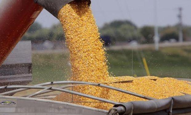 Se negociaron unas 200 mil toneladas del maíz nuevo.