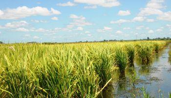 Tecnología aplicada al agro: cómo aumentar la eficiencia en un 40%