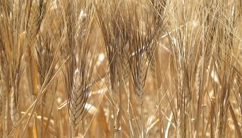 Le agregaron valor al trigo y hoy exportan a cuatro países