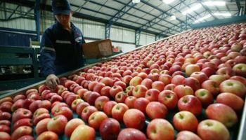 Grave para el Alto Valle: Brasil prohibió el ingreso de peras y manzanas de la región