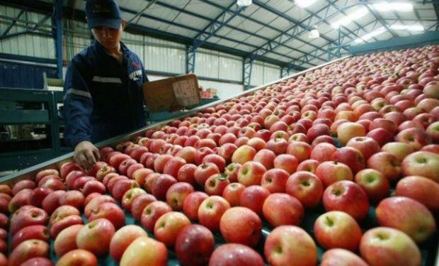 Las exportaciones de manzana y pera del Alto Valle representan la mitad de las exportaciones de fruta frescas del país.
