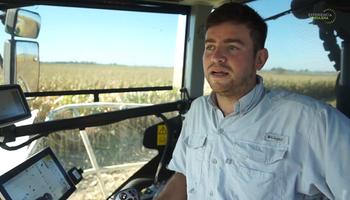Silaje de maíz: los secretos forrajeros de una familia de contratistas