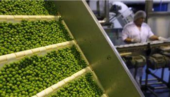 Arvejas: las 7 empresas argentinas que ya pueden exportar al mayor mercado global de la legumbre
