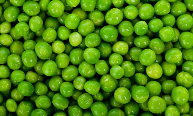 En la Argentina, la producción de arveja es básicamente del tipo verde y se vende en su mayoría a Brasil.