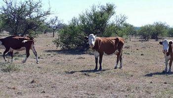 La sequía genera daños en Corrientes y declaran la emergencia agropecuaria