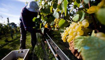 A días de comenzar la vendimia los productores exigen un precio justo para la uva