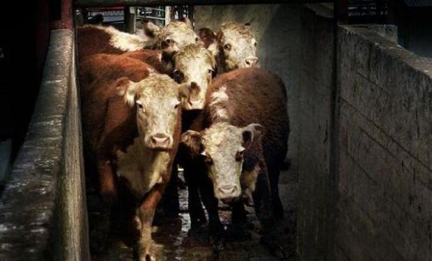 Datos del informe de oferta y demanda mundial de carne del USDA.