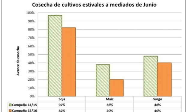 Cosecha en Córdoba - Bolsa de Cereales de Córdoba.