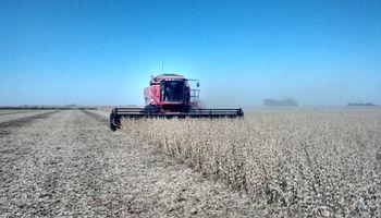 Con buen clima sigue avanzando la cosecha