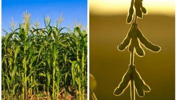 Córdoba: avanza el maíz, retrocede la soja