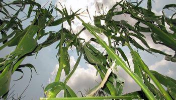 Crece aún más la participación del Estado en la renta agrícola