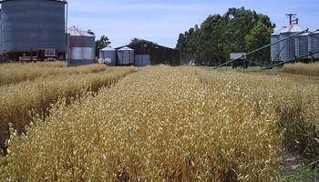 Una alternativa que gana terreno, ideal para la rotación de cultivos