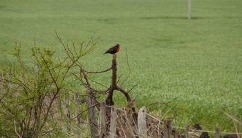 El desafío de proteger aves en peligro de extinción