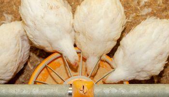 Actualización del marco normativo de los alimentos para animales