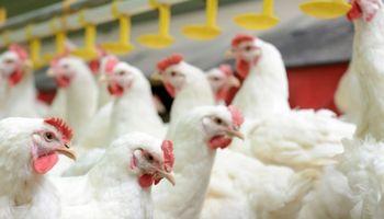 Rige la certificación electrónica para exportar productos aviares