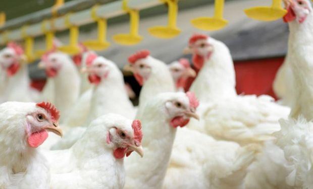 En 2017, se exportaron más de 120 mil toneladas de carne aviar fresca.