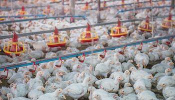 La producción de carne aviar creció un 1,7 % y aumentó el consumo per cápita durante 2020