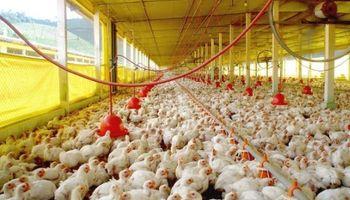 """Fuerte recomposición de precios para la avicultura argentina: """"Hoy estamos bien"""""""