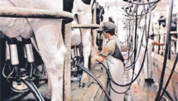 Asistencia a productores lecheros