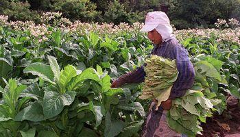 Tras el mal clima, fondos para productores de Jujuy
