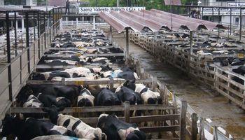 Liniers: la demanda exportadora sostuvo los precios de vacas y toros durante la semana